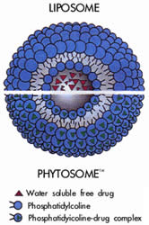 Phytosome Process